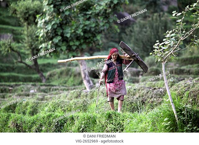 A Hindu Rajput woman carries a large plow along the rice terraces during planting season in Himachal Pradesh, India. - HIMACHAL PRADESH, INDIA, 02/07/2010