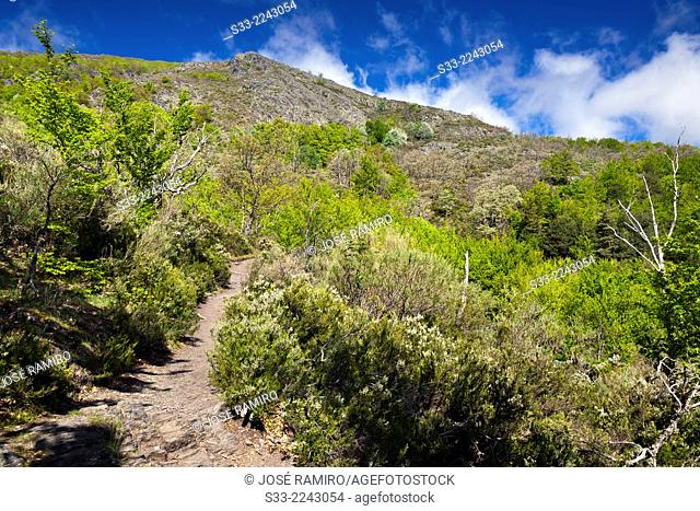 Buitrera peak in the Sierra Norte. Guadalajara. Castilla la Mancha. Spain
