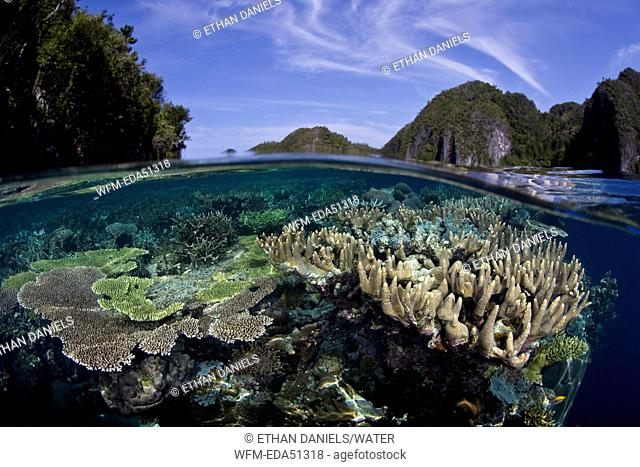 Corals growing in shallow Water, Misool, West Papua, Indonesia
