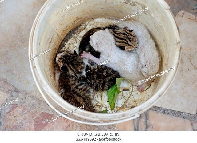 cat - four kittens in bucket restrictions: Tierratgebebücher, Kalender / animal guidebooks, calendars
