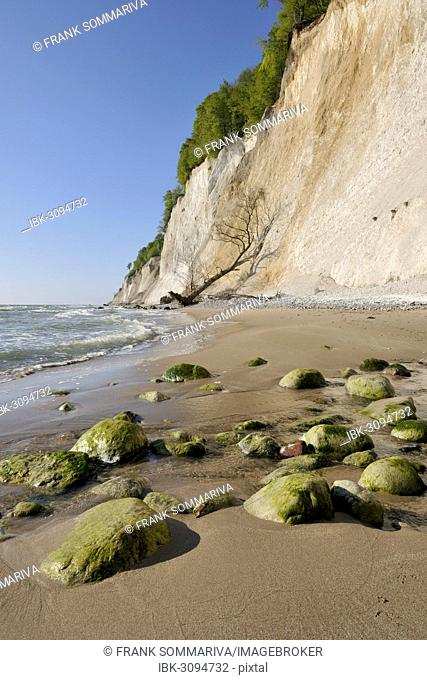 Coastal cliffs, shingle beach and chalk cliffs, Jasmund National Park, Rügen, Mecklenburg-Western Pomerania, Germany