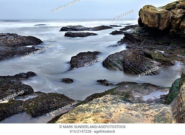 Seaweed Covered Rocks and Waves St Andrews Fife Scotland
