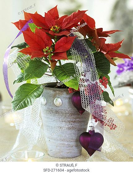 Red poinsettia in pot with heart-shaped tree ornaments