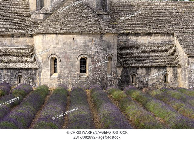 Senanque Abbey with lavender fields near Gordes Vauclause Provence-Alpes-Cote d'Azur France