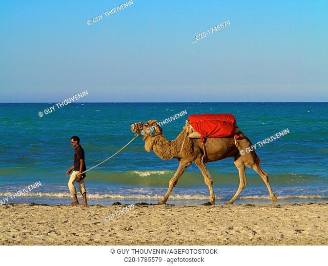 Man pulling his camel on the beach, Djerba, Tunisia
