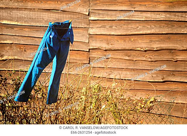 Pair of blue trousers hanging on clothesline, blowing in the wind, with tall wooden fence in background