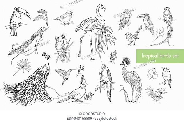 Realistic hand drawn contour collection of beautiful exotic tropical birds with palm leaves, Flamingos, cockatoo, hummingbird, toucan, peacock