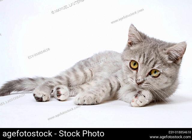 Sweet Kittten 02