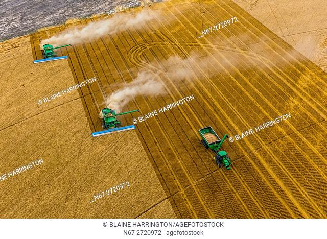 Aerial view of combines working during the wheat harvest, Schields & Sons Farming, Goodland, Kansas USA