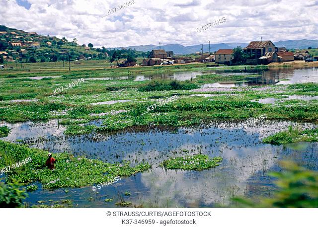 Houses and rice paddies outside the city of Antananarivo. Republic of Madagascar