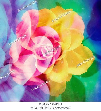 Photomontage, multiple exposure, flowers, multicolored, detail