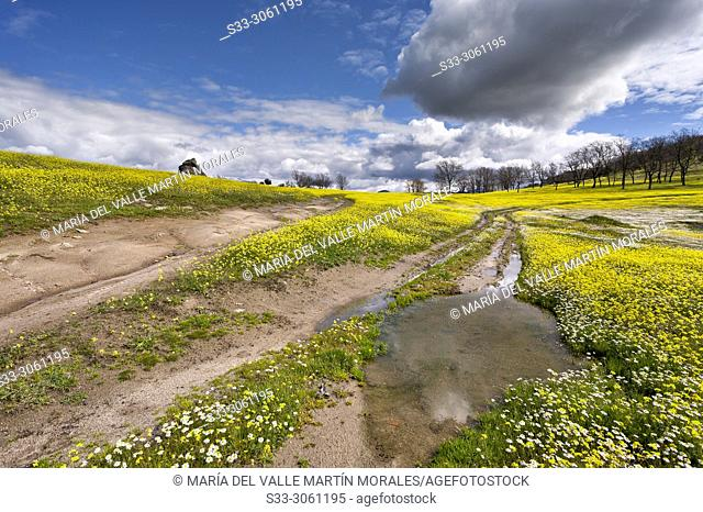 Ruts and puddles in a path in the meadows on a spring day. Higuera de las Dueñas. Avila. Spain