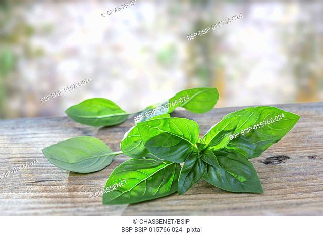 Fresh organic basilic leaves on a wooden table on blurry background
