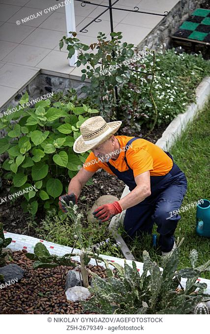 Russia. Belgorod region. Elderly man working in the garden. Flower Care