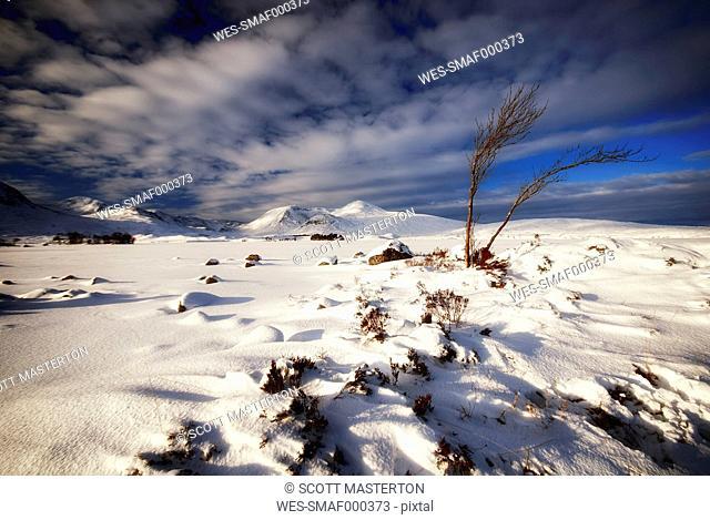 Great Britain, Scotland, Rannoch Moor in winter