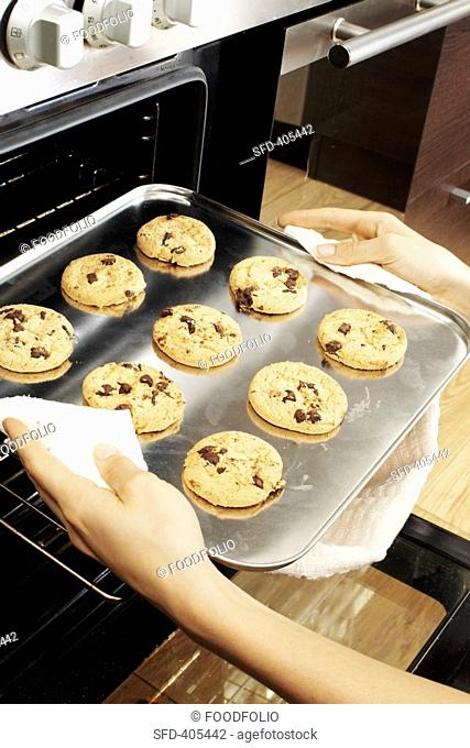 Taking chocolate chip cookies out of the oven Not available for exclusive usages