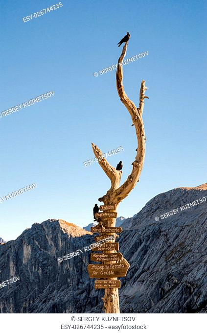 Wooden signpost with route arrows on dry wood tree with birds in German Bavarian Alps mountains on Alpspitze peak