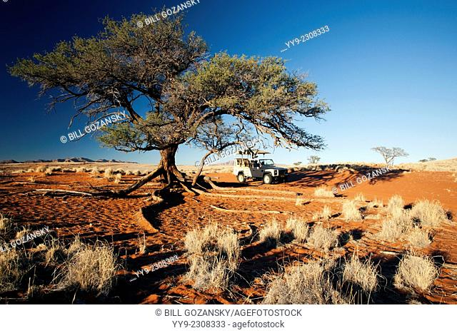Tree and Land Rover in Wolwedans Landscape - NamibRand Nature Reserve - Hardap Region, Namibia, Africa