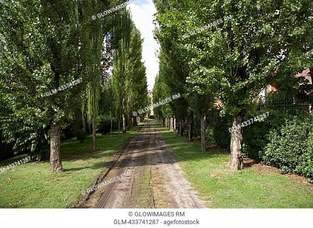 Trees along a dirt road, Mozzanica, Bergamo Province, Lombardy, Italy
