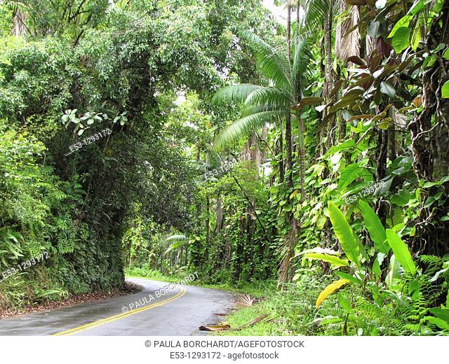 Old Hawaiian highway north of Hilo, Big Island, Hawaii, USA