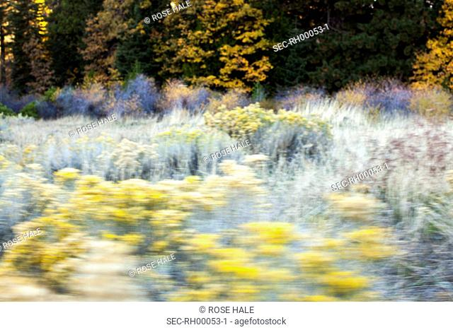 Blurred motion of meadow