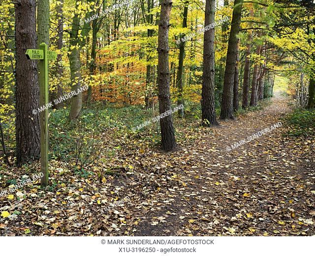 Path through autumn woodland at Hornbeam Park Harrogate North Yorkshire England