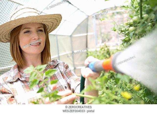 Portrait of female gardener watering plants in a greenhouse