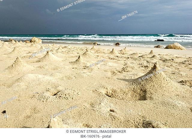 Sand hills built by crabs, beach on Socotra island, UNESCO World Heritage Site, Yemen