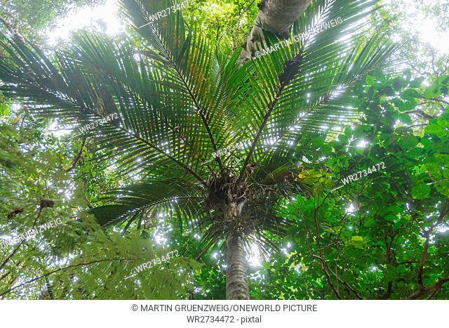 New Zealand, Northland, Kaihu, Trounson Kauri Park, tree farm in the Touronson Kauri Park