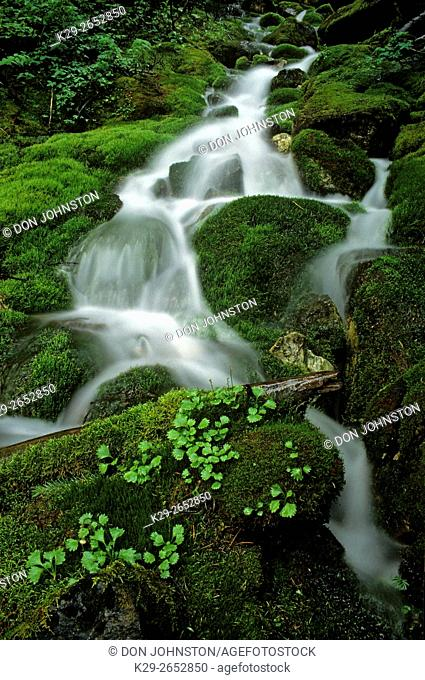 Mountain cascade flowing through beds of lush moss, Yoho National Park, BC, Canada