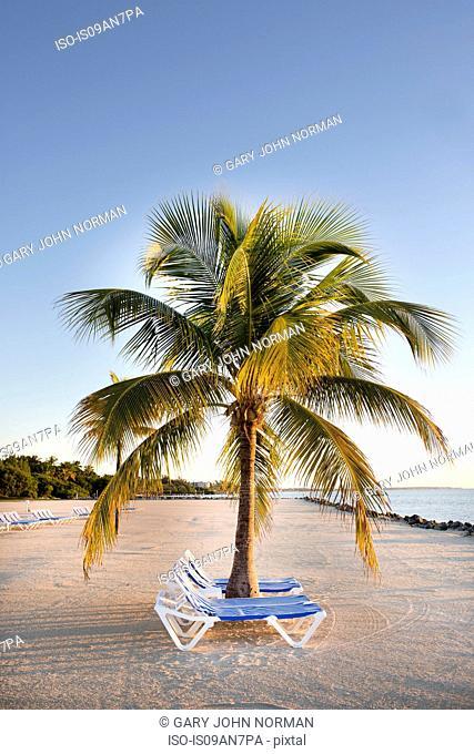 Sun loungers on sandy beach, Islamorada, Florida Keys, USA