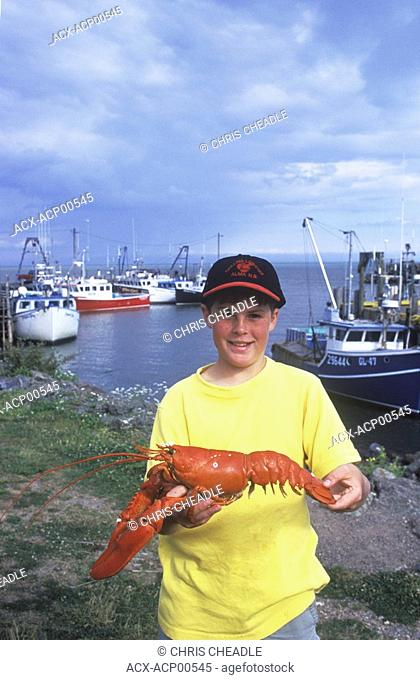 Boy holds cooked lobsters, Alma, New Brunswick, Canada