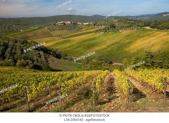 Vineyards in the vicinity of Siena, Tuscany, Italy