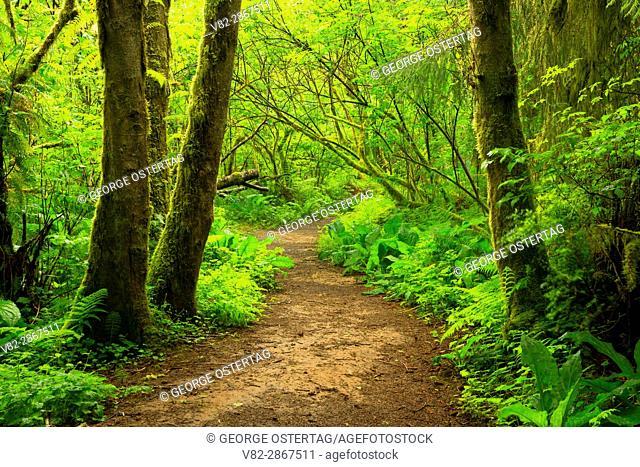 Spencer Creek Trail, Beverly Beach State Park, Oregon