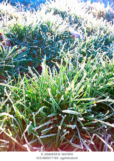 Frost on new spring grass