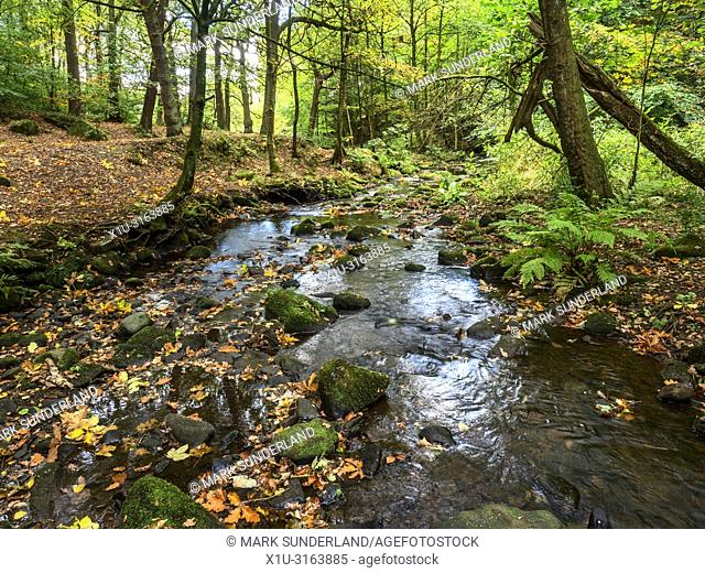 Loadpit Beck flowing through Shipley Glen in early autumn near Baildon West Yorkshire England