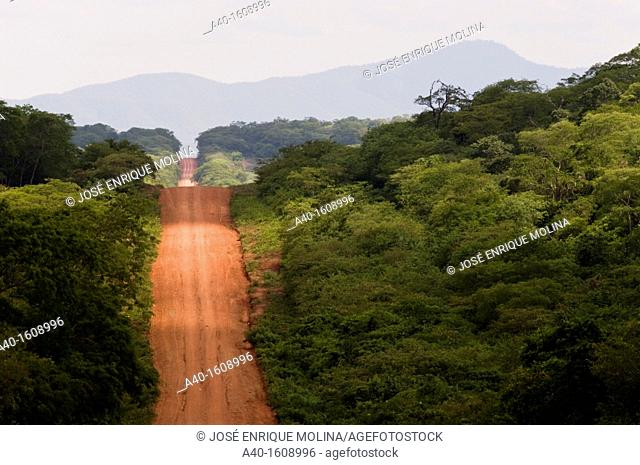 Bolivia. Santa Cruz department. Road in the tropical forest in Chiquitania