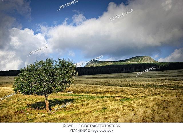 Mont Mezenc, a 5755 feet high volcanic mountain in the Haute Loire departement, Auvergne, France