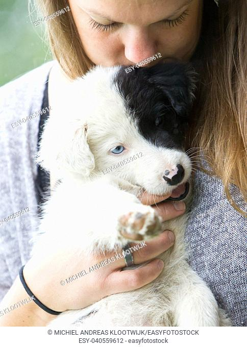 Small Border Collie puppy with blue eye in the arms of a woman, rain background