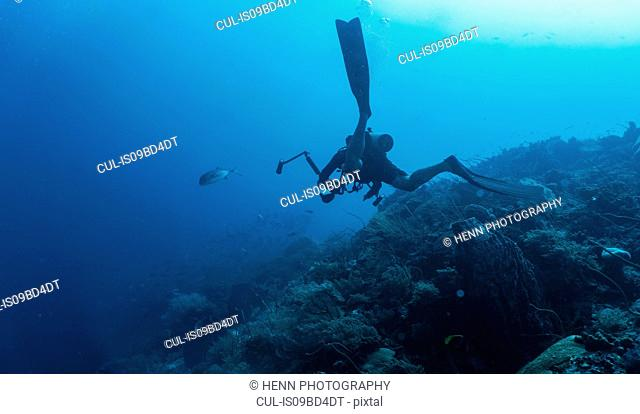 Underwater view of man scuba diving with underwater camera at the Tubbataha Reefs Natural Park, Cagayancillo, Palawan, Philippines