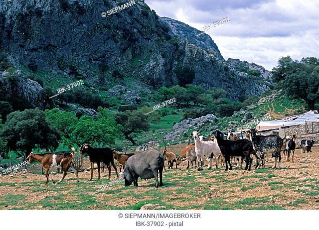 Sierra de Grazalema Andalusia Province Cádiz Spain
