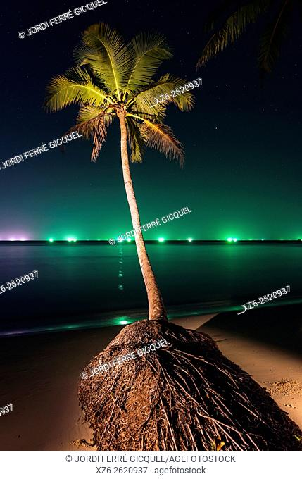 Coconut palm at night in Koh Kood island, Ko Kut district in Trat Province, Thailand, Asia