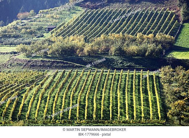 Cultural landscape with a vineyard and an orchard in Viessling, Spitzer Graben valley, Wachau valley, Waldviertel region, Lower Austria, Austria, Europe