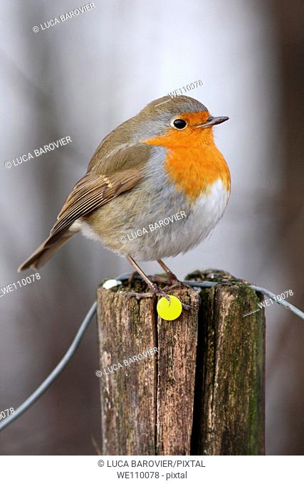 Robin on a pole with e yellow pushpin