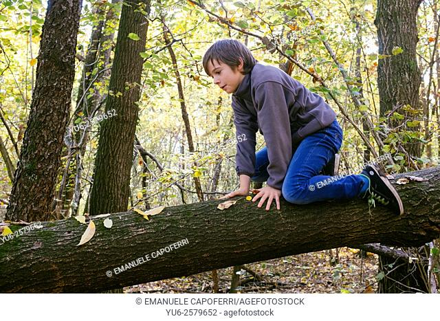 Child playing in the woods in autumn climbing on fallen tree