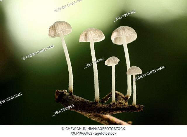 Mushroom, Fungi on tree trunk, borneo