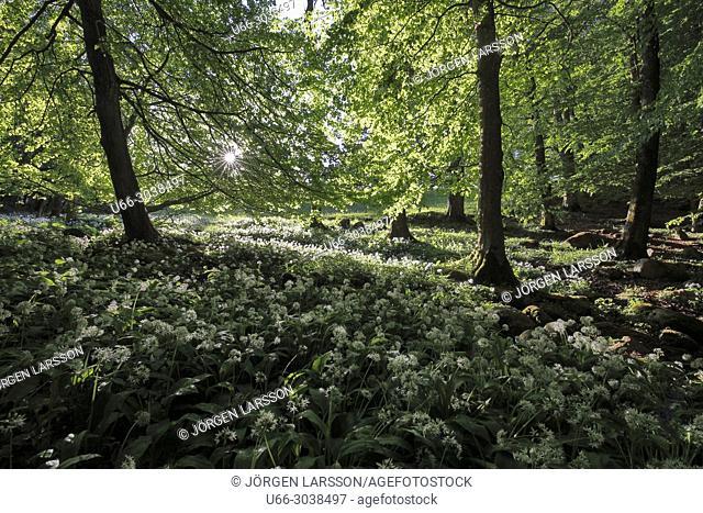 Spring in Skane, Sweden