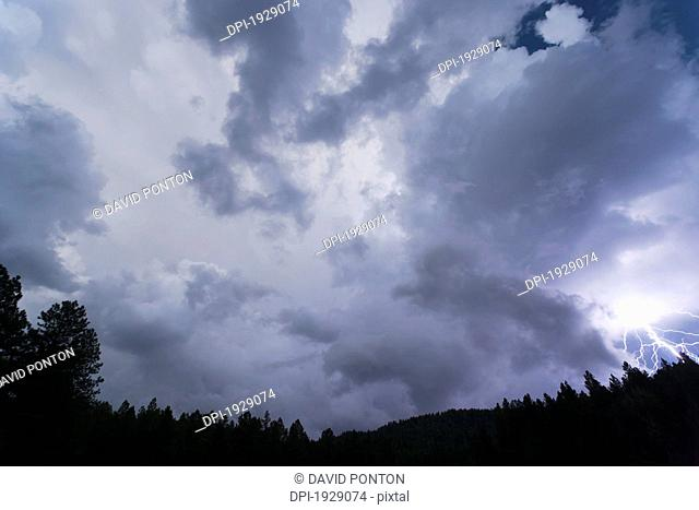 lightning bolt and storm clouds over forest at twilight, new mexico, usa