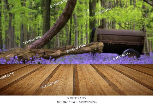 Old farm machinery in bluebell flowers in Spring forest landscape with wooden planks floor