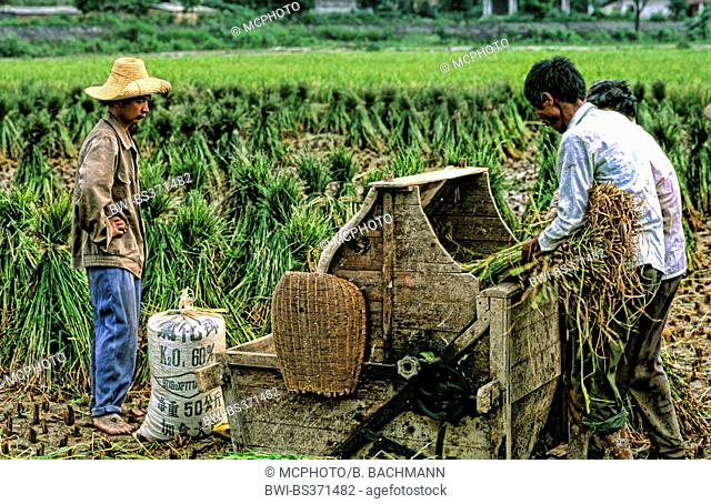 Farmers in Guilin China with Treshing Rice Machine, China